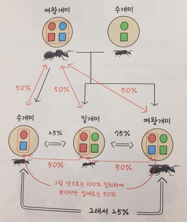 개미염색체